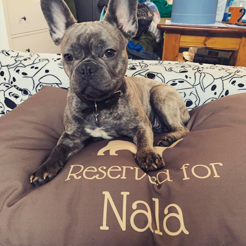 Nala with her Reserved for Bed