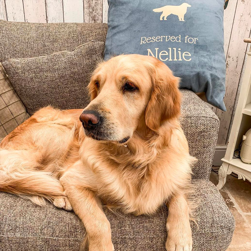 Nellie with her Personalised Reserved For Cushion