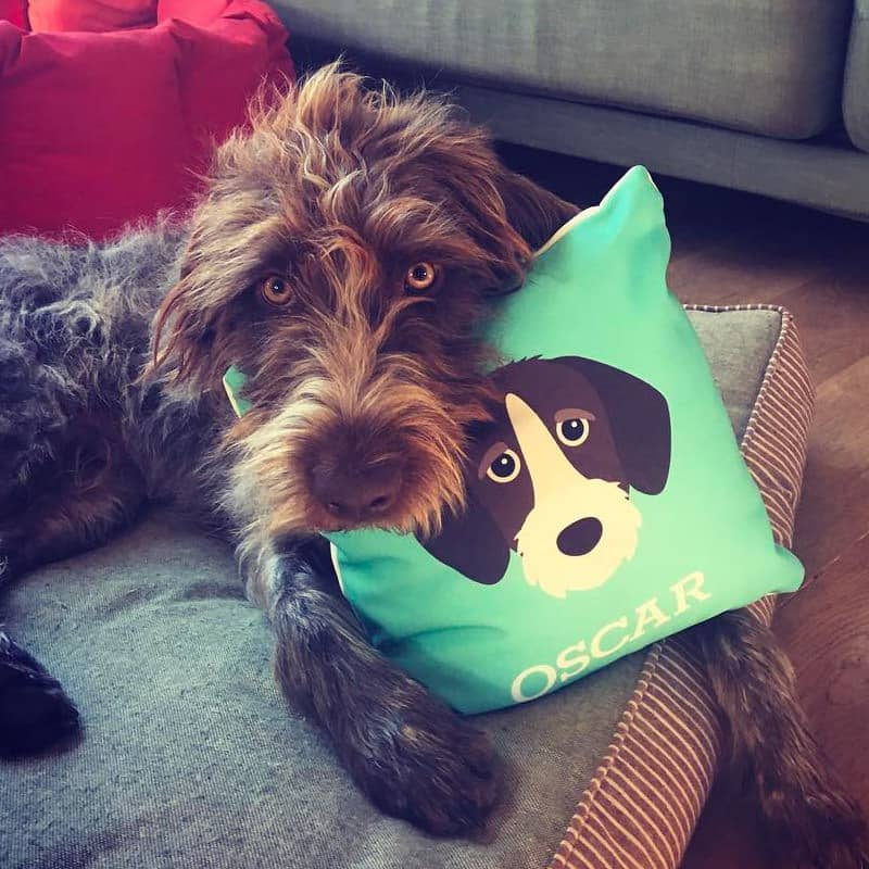 Oscar with his Icon Cushion