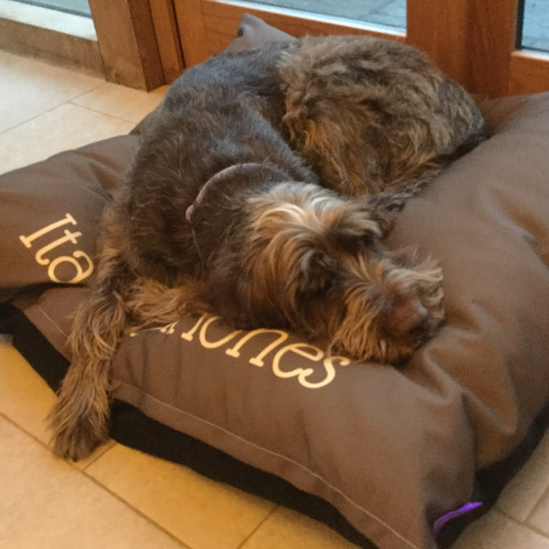 Pino with his Personalised Dog Bed