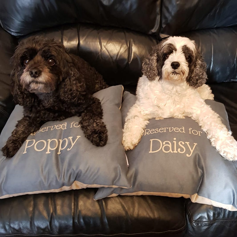 Poppy and Daisy with their Personalised Reserved For Cushions