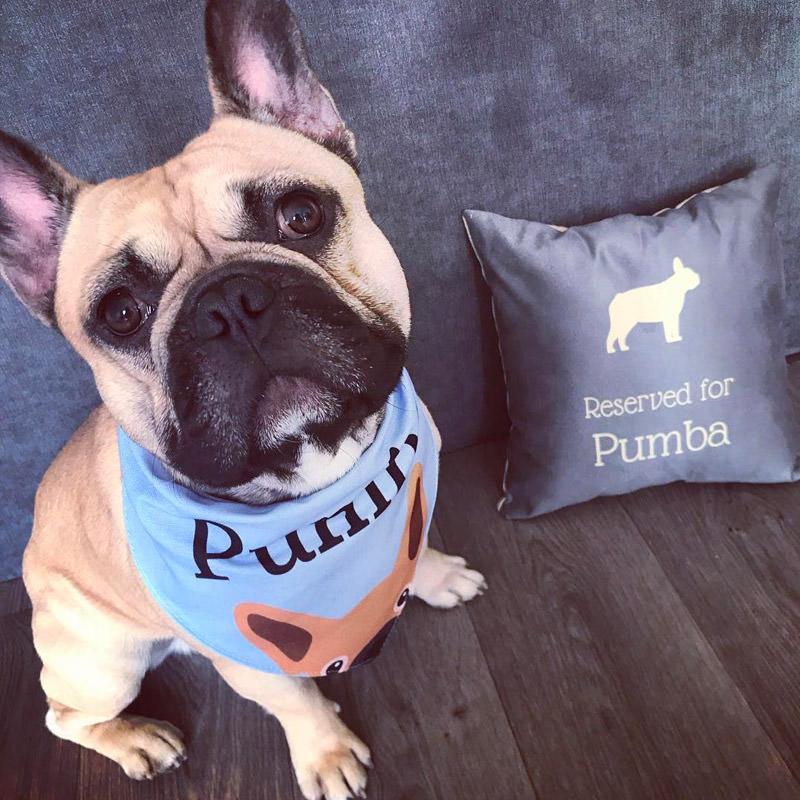 Pumba with his Bandana and Cushion