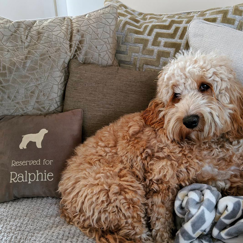 Ralphie with his Personalsied Reserved For Cushion