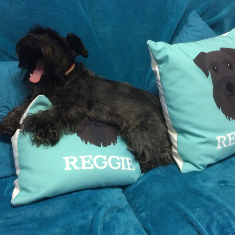 Reggie with his Personalized Yappicon Cushions