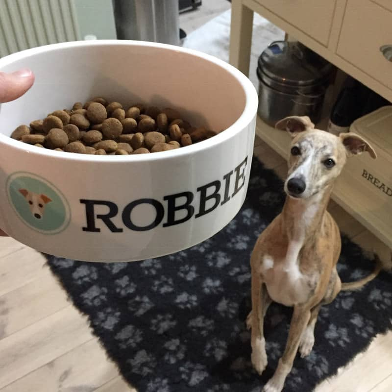 Robbie with his Personalised Dog Bowl
