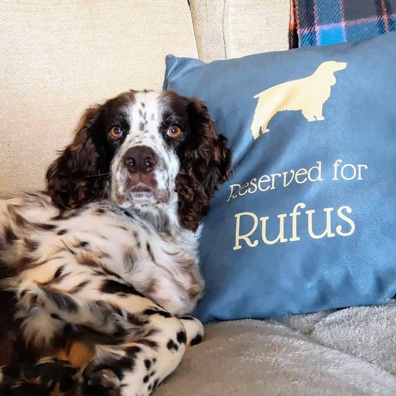 Rufus with his Reserved for Cushion