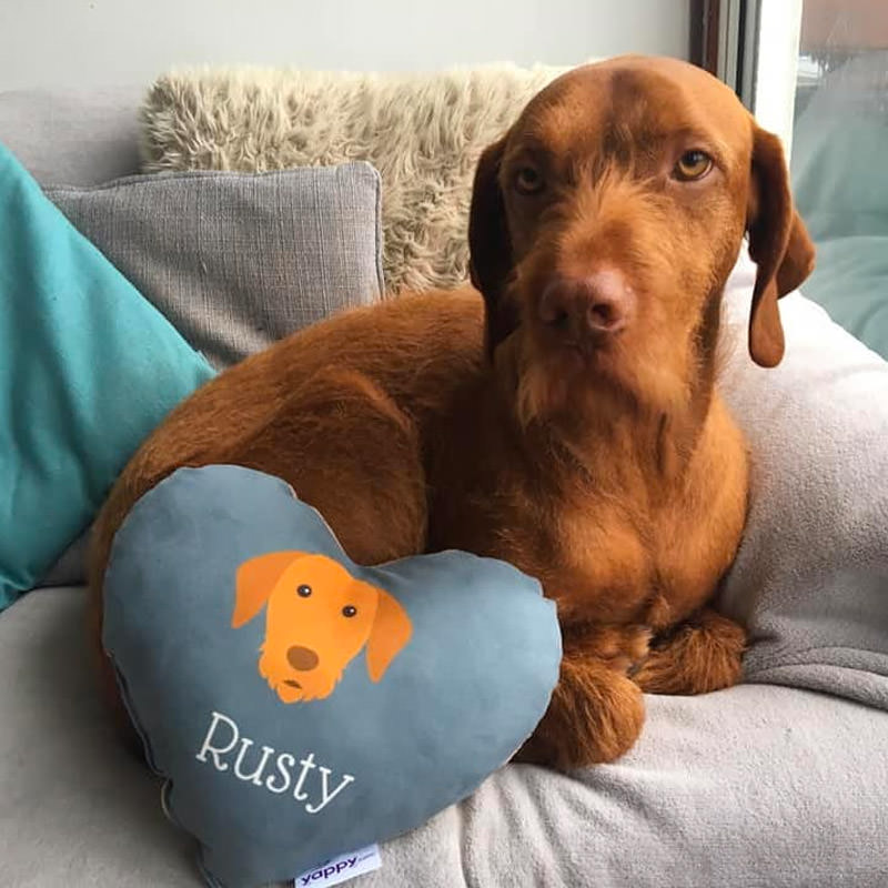 Rusty with his Personalised Heart Shaped Cushion