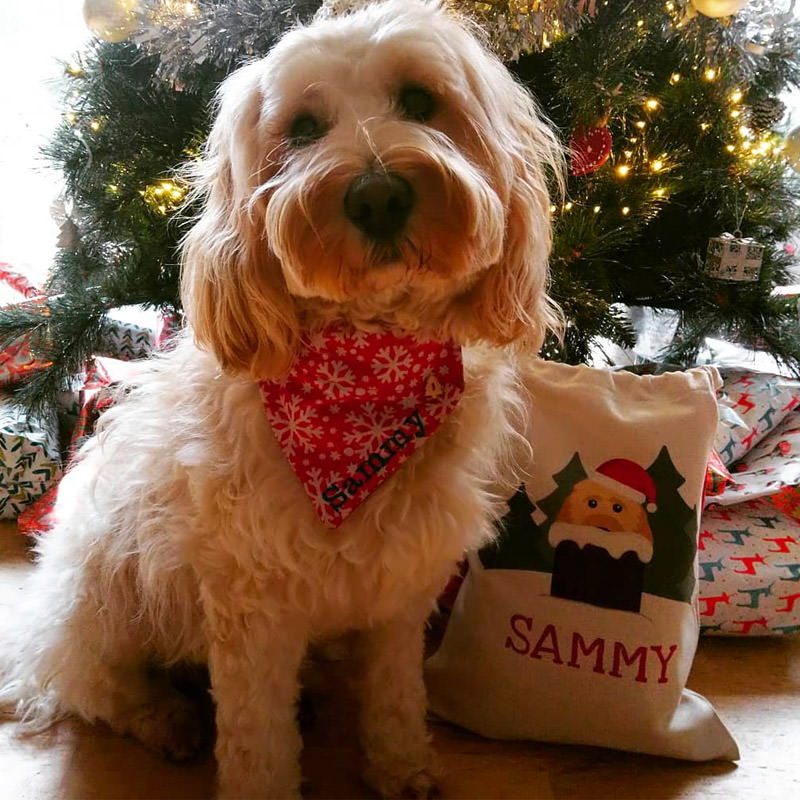 Sammy with his Peeking Santa Sack