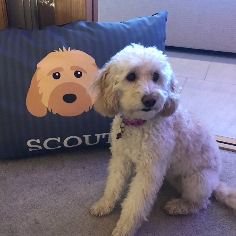 Scout with his Icon Bed