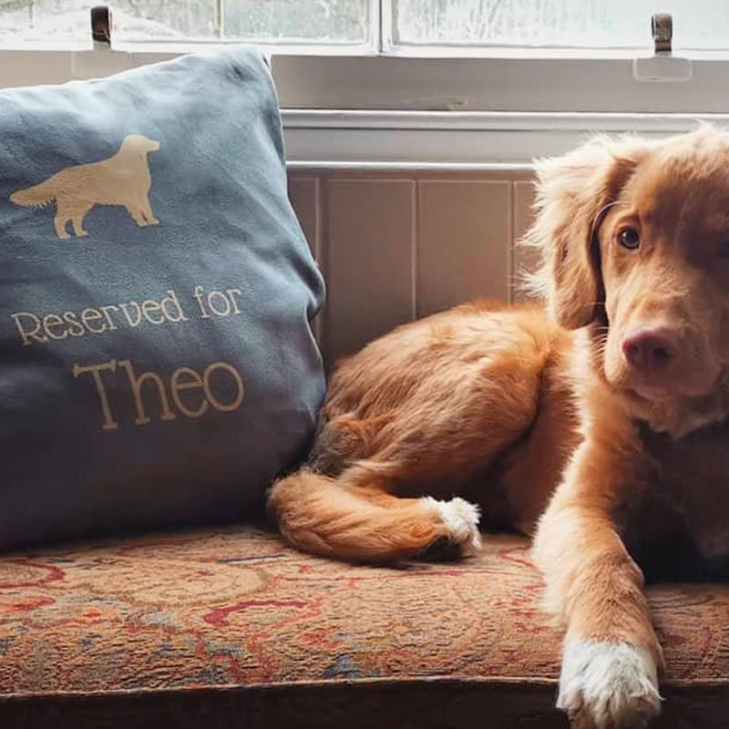 Theo with his Reserved for Cushion