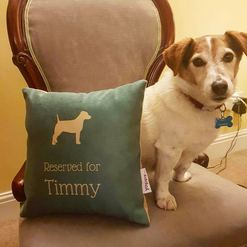 Timmy with his Reserved for Cushion