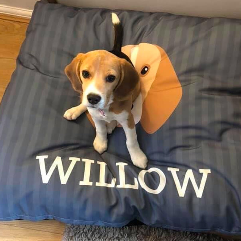 Willow on her Personalised Dog Bed