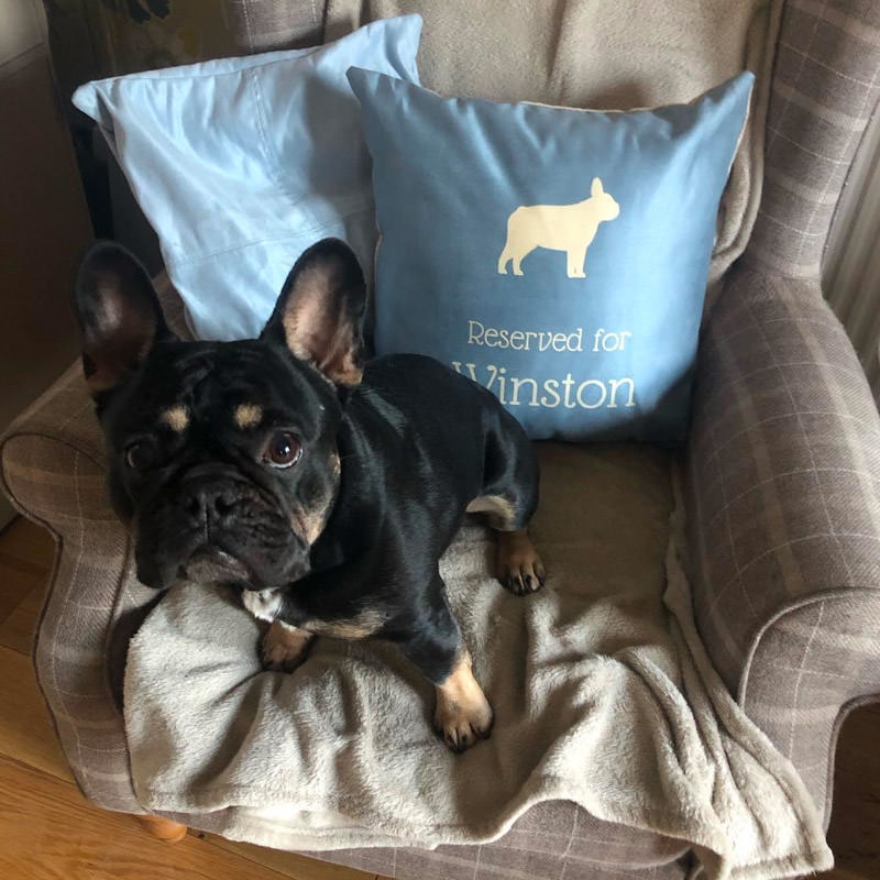 Winston with his Reserved for Cushion