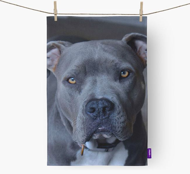 Dish Towel with photo of your American Pit Bull Terrier