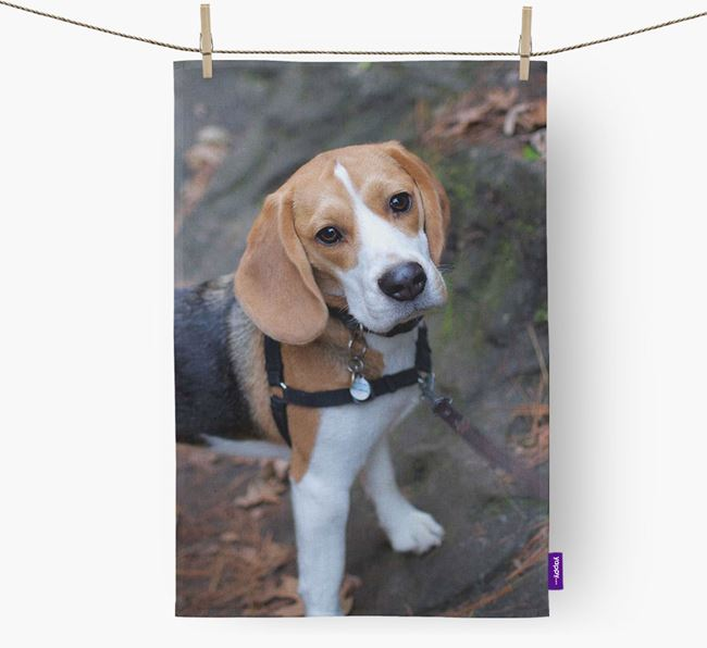 Dish Towel with photo of your Beagle