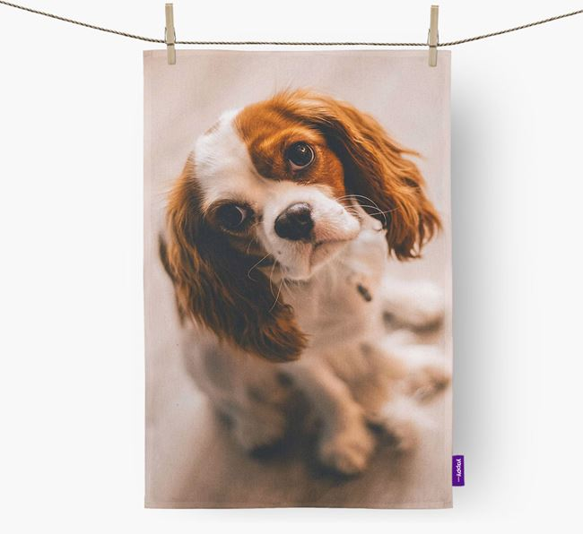 Dish Towel with photo of your Cavalier King Charles Spaniel