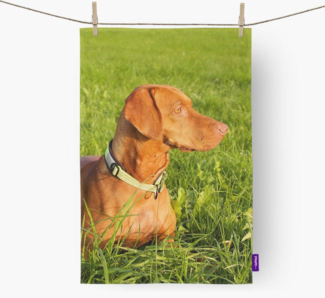 Dish Towel with photo of your Hungarian Vizsla