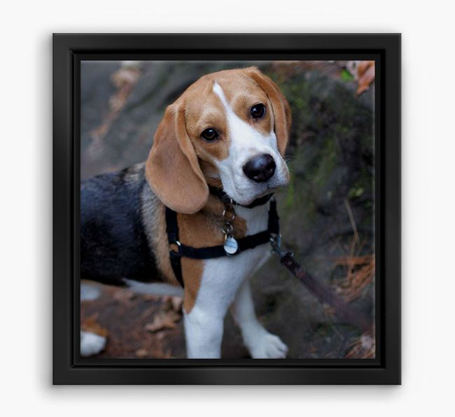 Photo Upload Boxed Canvas Print - Personalised with your Beagle