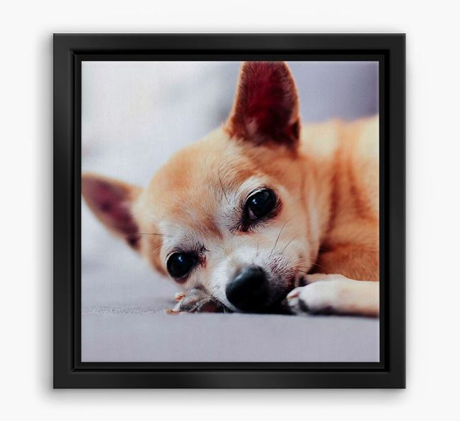 Photo Upload Boxed Canvas Print - Personalised with your Chihuahua