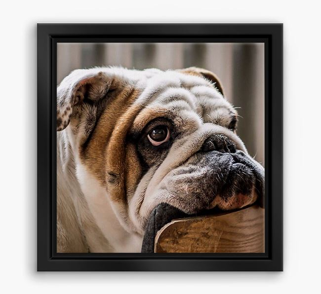 Photo Upload Boxed Canvas Print - Personalised with your English Bulldog