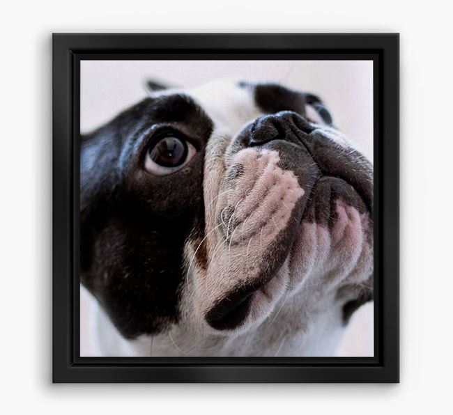 Photo Upload Boxed Canvas Print - Personalised with your French Bulldog