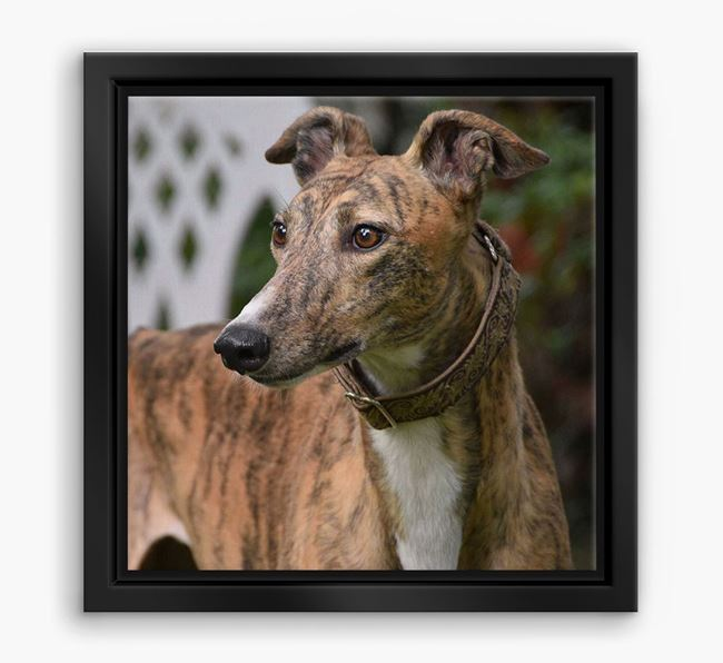 Photo Upload Boxed Canvas Print - Personalised with your Greyhound