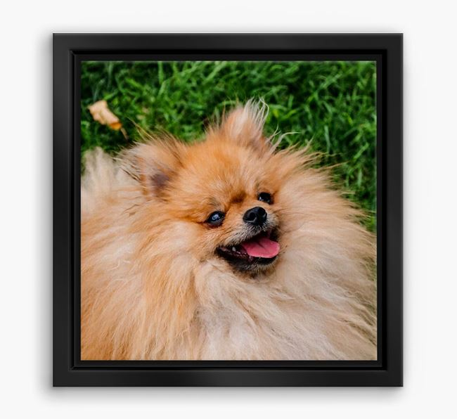 Photo Upload Boxed Canvas Print - Personalised with your Pomeranian