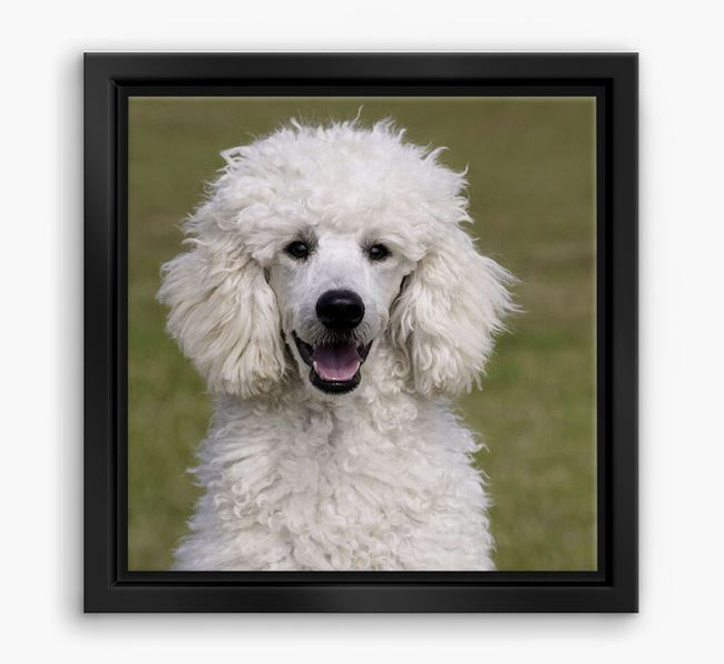 Photo Upload Boxed Canvas Print - Personalised with your Poodle