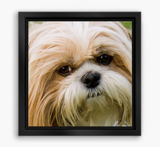 Photo Upload Boxed Canvas Print - Personalised with your Shih Tzu
