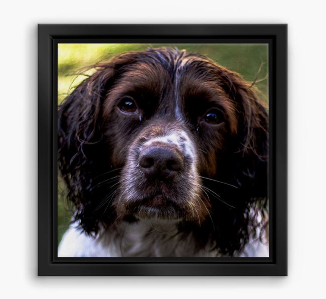 Photo Upload Boxed Canvas Print - Personalised with your Springer Spaniel