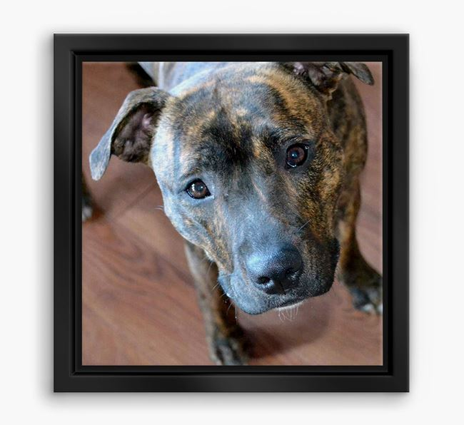 Photo Upload Boxed Canvas Print - Personalised with your Dog