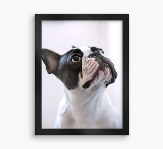 Photo Upload Framed Print - Personalised with your French Bulldog