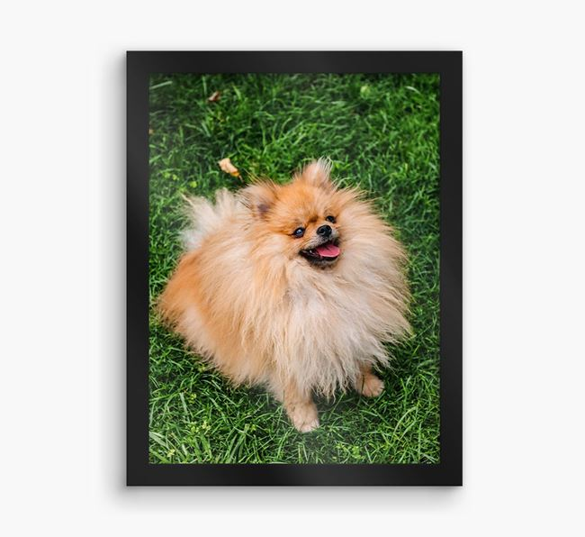 Photo Upload Framed Print - Personalised with your Pomeranian