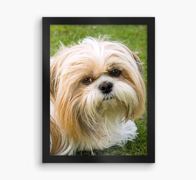 Photo Upload Framed Print - Personalised with your Shih Tzu