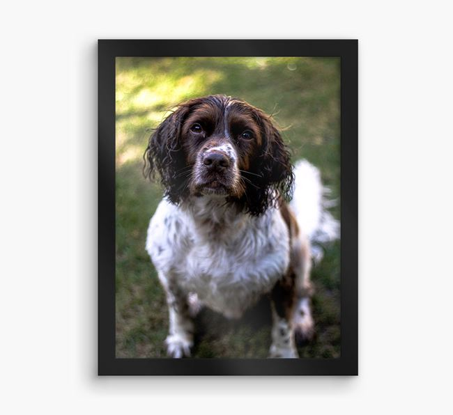 Photo Upload Framed Print - Personalised with your Springer Spaniel