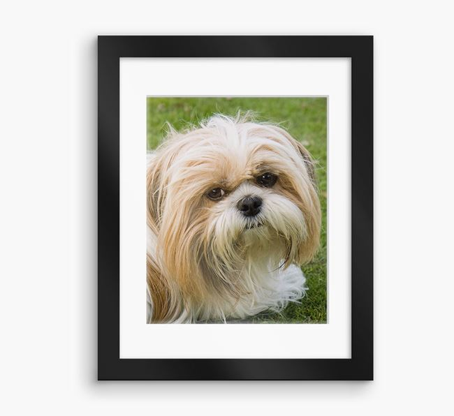 Photo Upload Framed Print with Mount - Personalised with your Shih Tzu