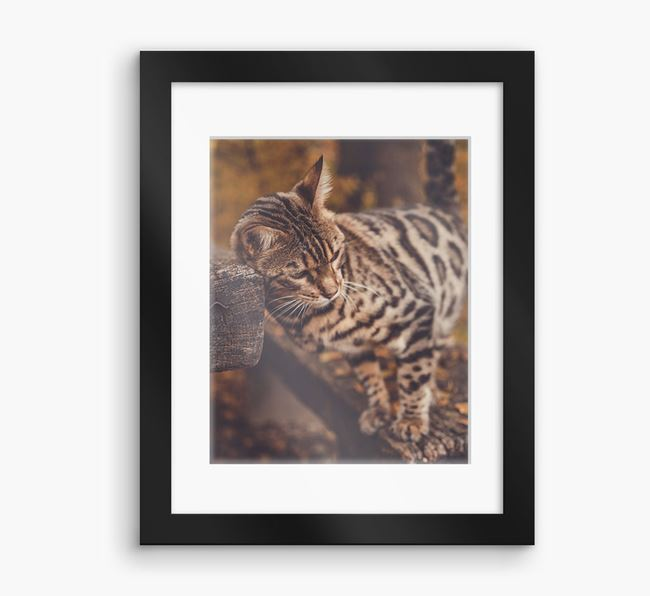 Photo Upload Framed Print with Mount - Personalised with your Bengal