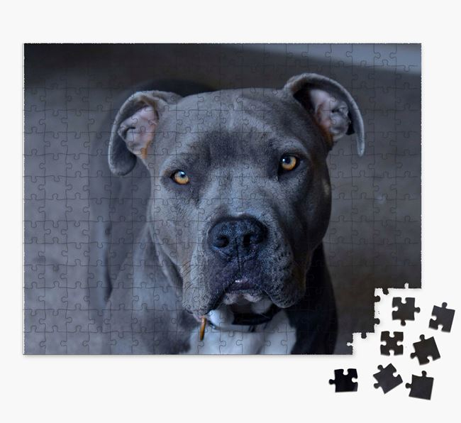 Photo Upload Jigsaw Puzzle - Personalized for your American Pit Bull Terrier