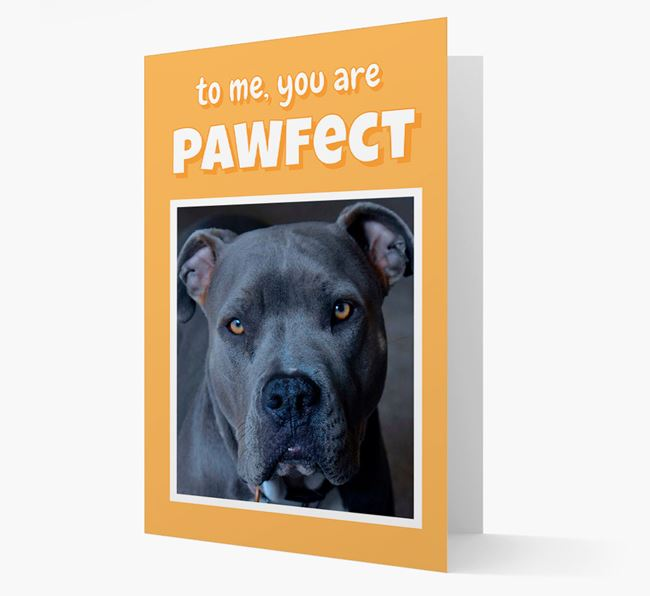 'You Are Pawfect' - American Pit Bull Terrier Photo Upload Card