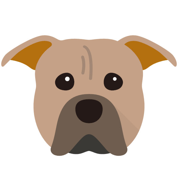 the American Pit Bull Terrier