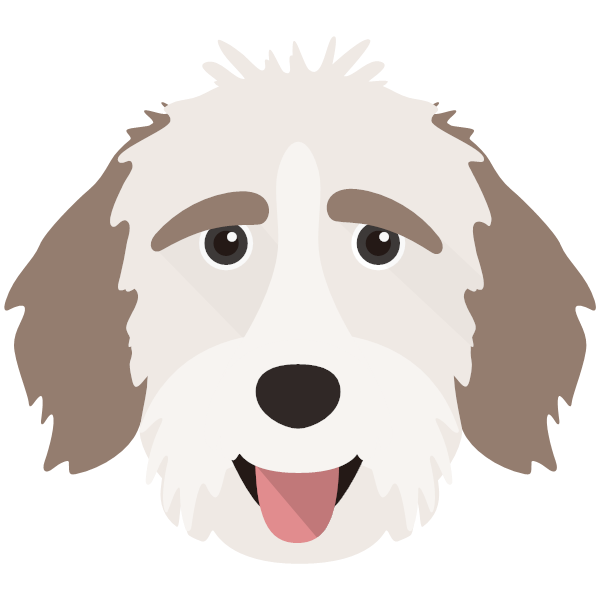 aussiedoodle-03 Yappicon