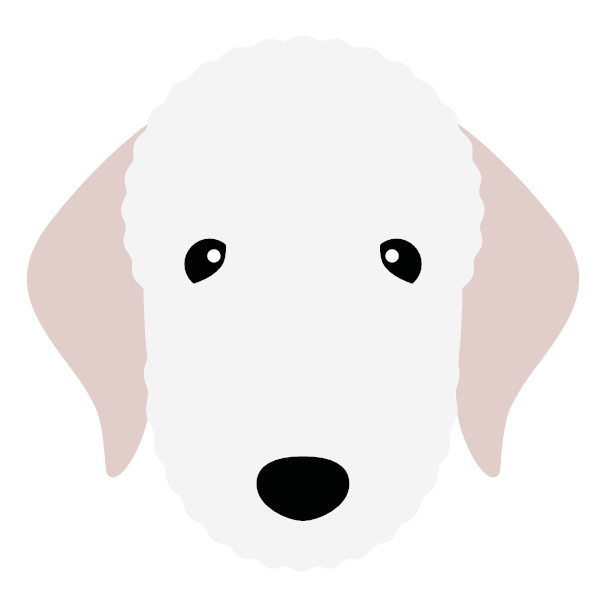 bedlingtonterrier-05 Yappicon