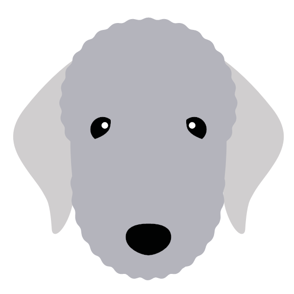 bedlingtonterrier-06 Yappicon