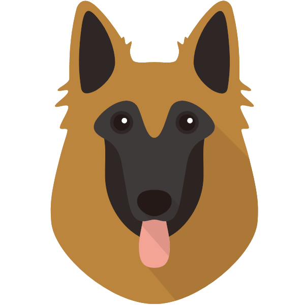 the Belgian Tervuren