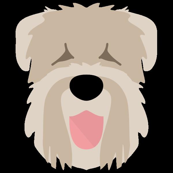 blackrussianterrier-06 Yappicon