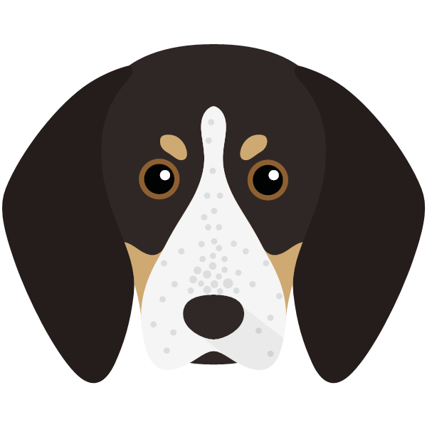 the English Coonhound