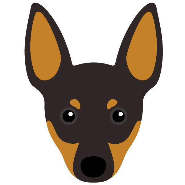 the English Toy Terrier