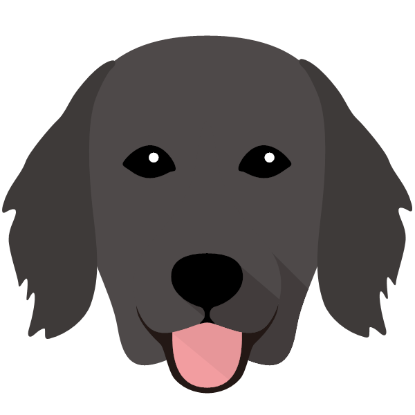the Flat-Coated Retriever