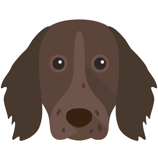 germanlonghairedpointer-01 Yappicon