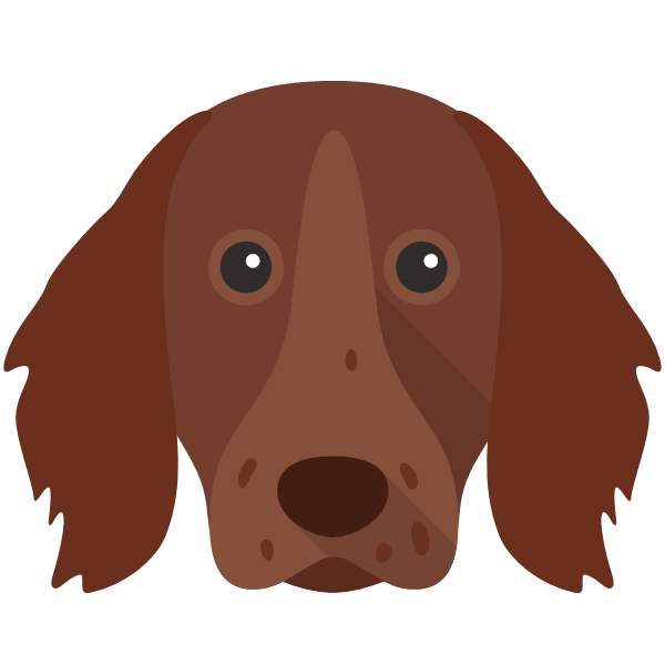 germanlonghairedpointer-03 Yappicon